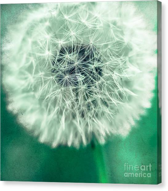 Blowball 1x1 Canvas Print