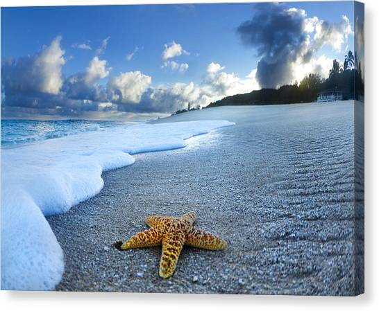 Coastal Art Canvas Print - Blue Foam Starfish by Sean Davey