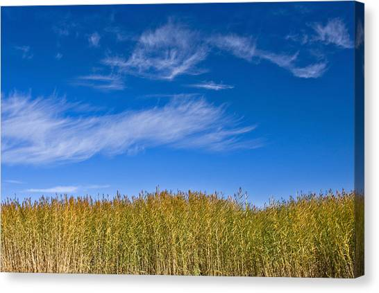 Blue Sky Canvas Print by Jason KS Leung