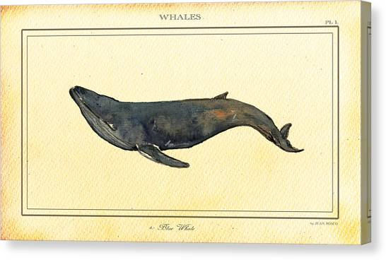 Blue Whales Canvas Print - Blue Whale by Juan  Bosco