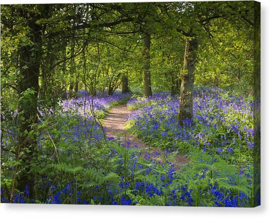 Bluebell Woods Walk Canvas Print
