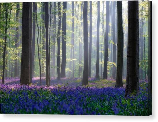 Tree Trunks Canvas Print - Bluebells by Adrian Popan