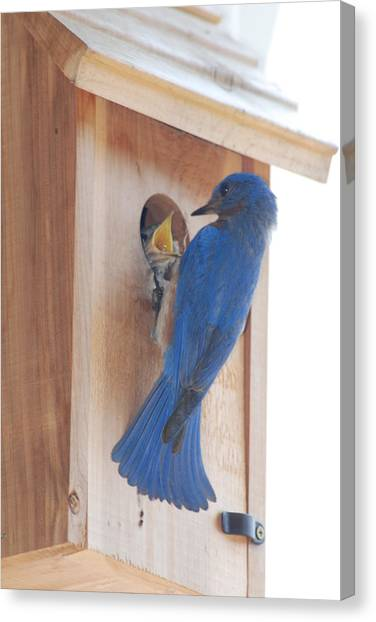 Bluebird Of Happiness Canvas Print