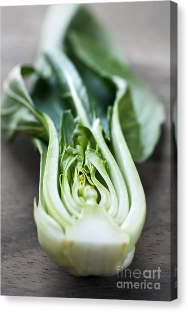Cabbage Canvas Print - Bok Choy by Elena Elisseeva