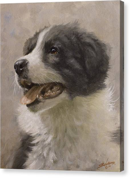 Canvas Print - Border Collie Pup Portrait IIi by John Silver