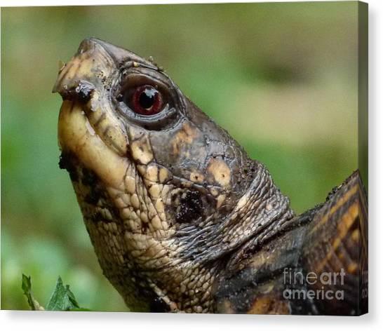 Box Turtles Canvas Print - Box Turtle by Jane Ford