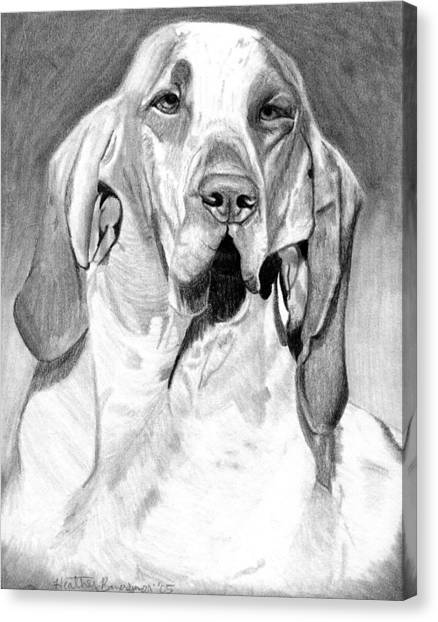 Bracco Italiano Dog Portrait Canvas Print by Olde Time  Mercantile