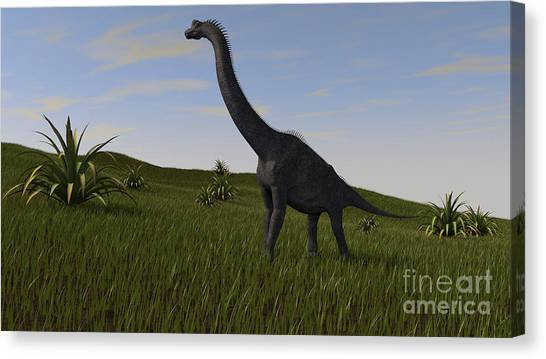 Brachiosaurus Canvas Print - Brachiosaurus Grazing In A Grassy Field by Kostyantyn Ivanyshen