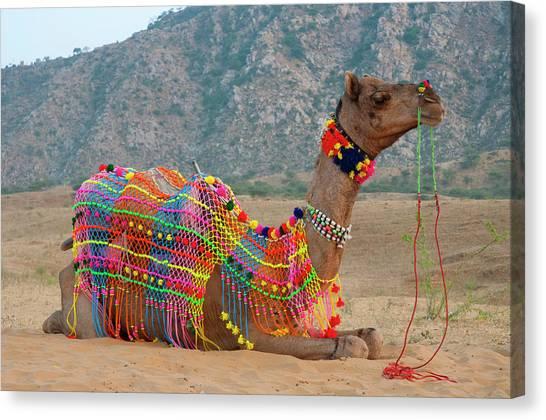 Thar Desert Canvas Print - Brightly Decorated Camel, Pushkar by Inger Hogstrom