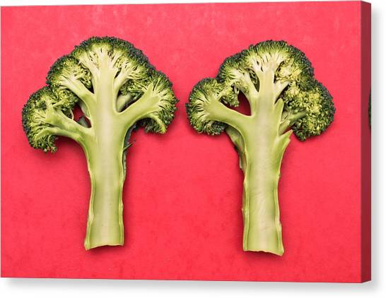 Broccoli Canvas Print - Broccoli by Tom Gowanlock