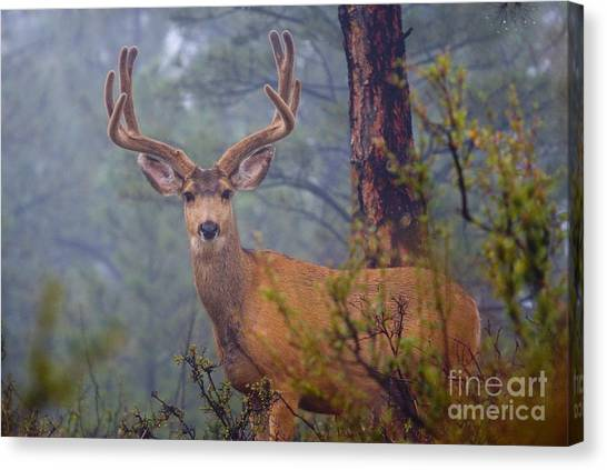 Buck Deer In A Mystical Foggy Forest Scene Canvas Print