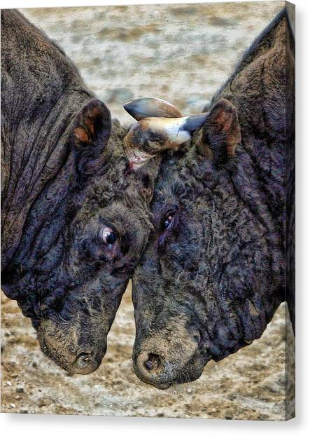 Bully Canvas Print by Karen Walzer