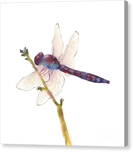 Burgundy Dragonfly  Canvas Print