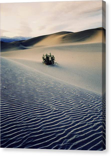 Bushes In Sand Dunes At Dusk Canvas Print by Gary Yeowell