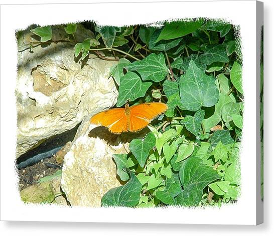 Butterflies Canvas Print by Joe Oliver
