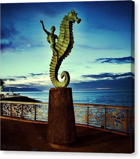 Fish Canvas Print - Caballeo Del Mar by Natasha Marco