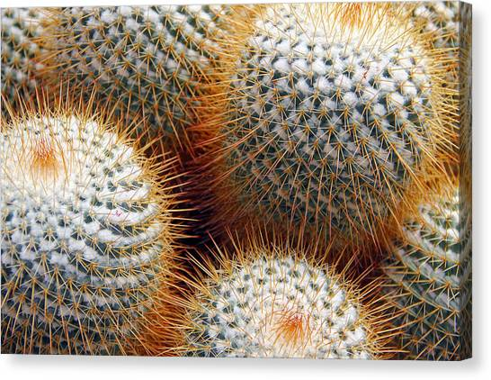 Cactus Canvas Print by Jim McCullaugh