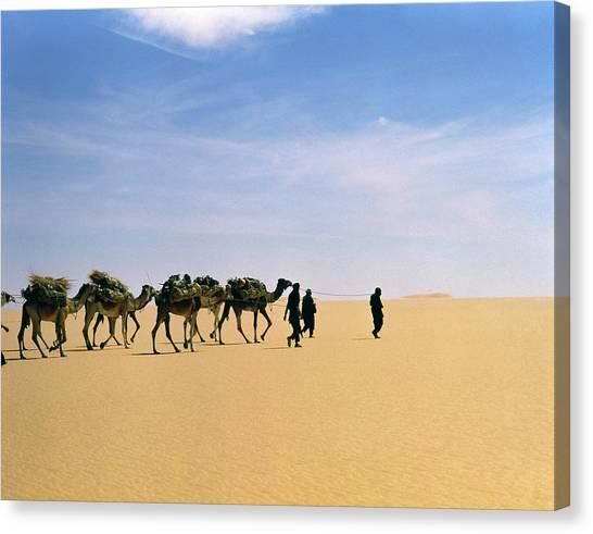 Caravan Canvas Print - Camel Caravan In Western Tenere Desert by Tony Buxton/science Photo Library