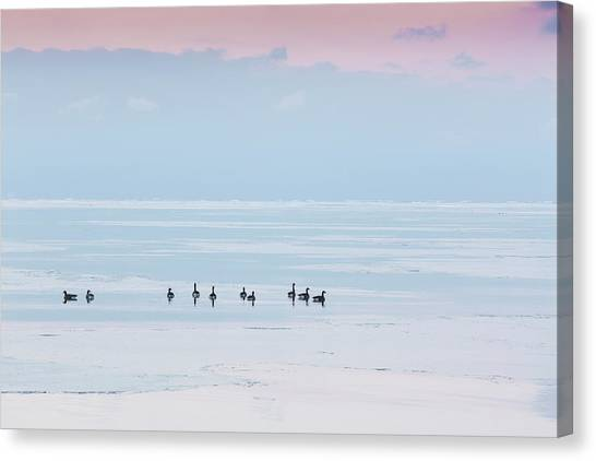 Canadian Geese Sit On Lake Ontario Canvas Print by Ed Norton