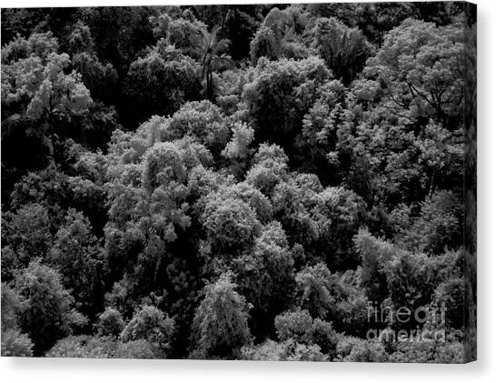 Amazon Rainforest Canvas Print - Canopy Of Amazon Rain Forest by Gregory G. Dimijian, M.D.