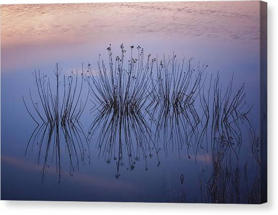 Cape May Meadows Canvas Print