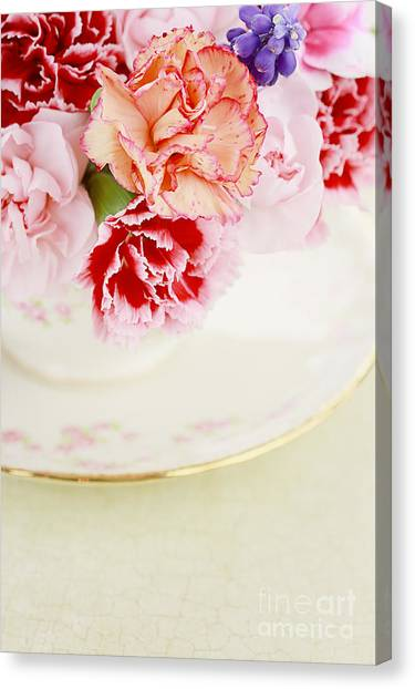 Spring Canvas Print - Carnations by Stephanie Frey