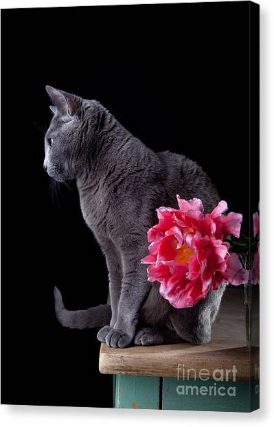 Russian Blue Canvas Print - Cat And Tulip by Nailia Schwarz