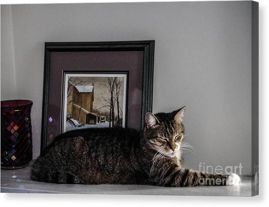 Cat At Rest Canvas Print