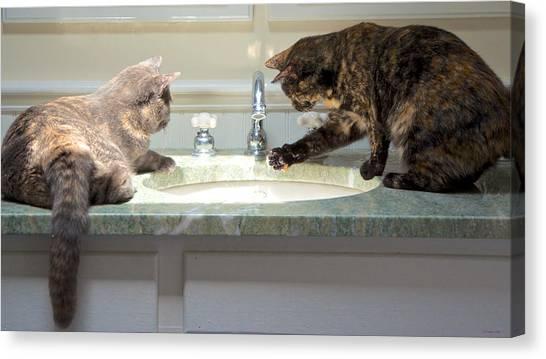 Cat Curiosity Canvas Print