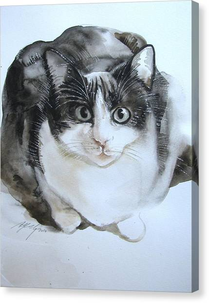 Cat In Black And White  Canvas Print by Alfred Ng