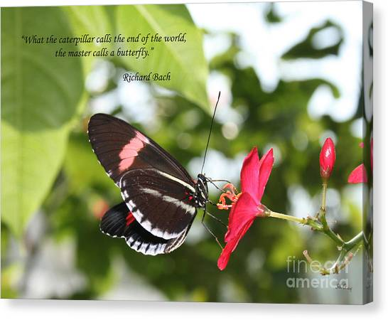 Caterpillers Canvas Print - Caterpiller To A Butterfly by Sandra Clark