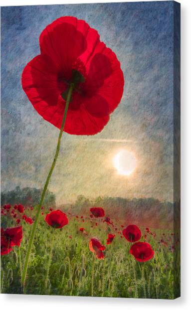 Poppys Canvas Print - Celebrate The Day by Debra and Dave Vanderlaan