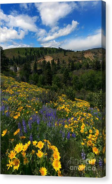 Meadow Canvas Print - Central Washington Spring by Mike Dawson