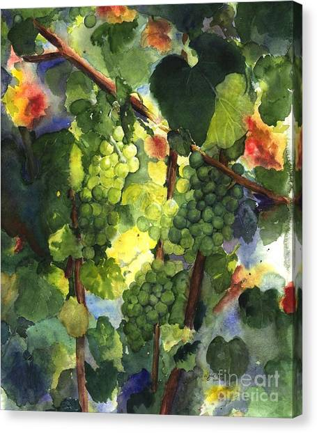 Vineyard In Napa Canvas Print - Chardonnay Au Soliel by Maria Hunt