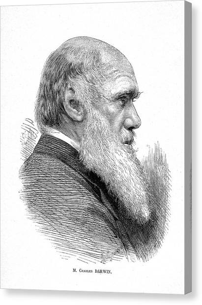 Controversial Canvas Print - Charles Darwin by Collection Abecasis