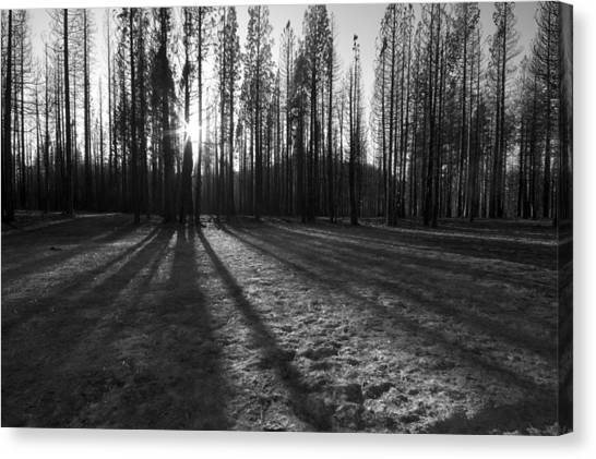 Charred Silence - Yosemite Rim Fire 2013 Canvas Print