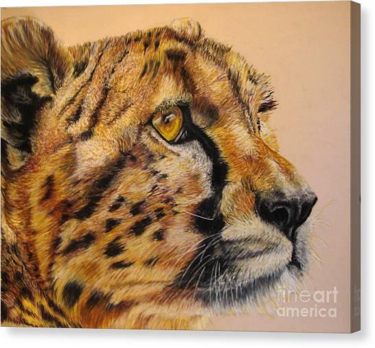 Cheetah Gaze Canvas Print by Ann Marie Chaffin