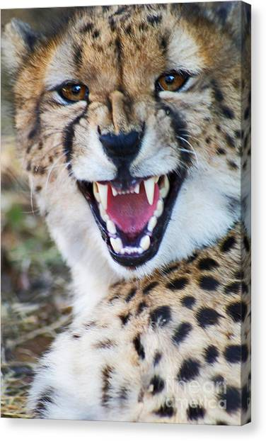 Cheetah With Attitude Canvas Print