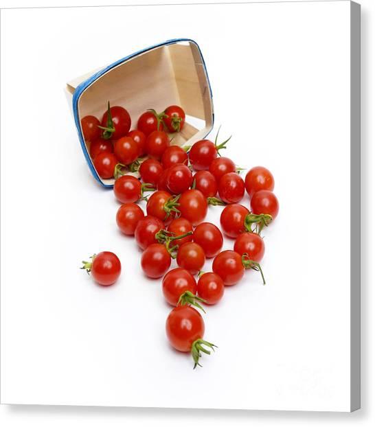 Cherry Tomato Canvas Print - Cherry Tomatoes by Bernard Jaubert
