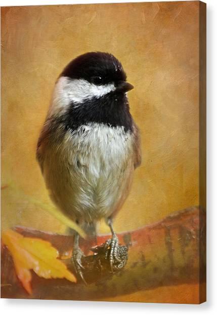 Chickadees Canvas Print - Chickadee by Angie Vogel
