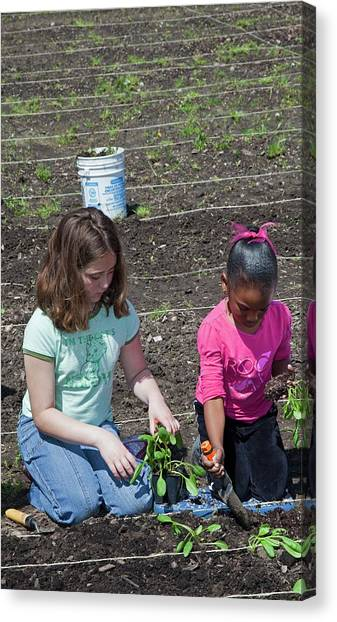 Spinach Canvas Print - Children At Work In A Community Garden by Jim West