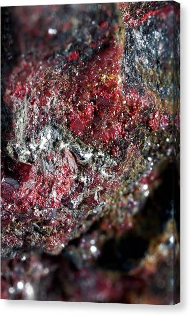 Principals Canvas Print - Cinnabar by Science Photo Library