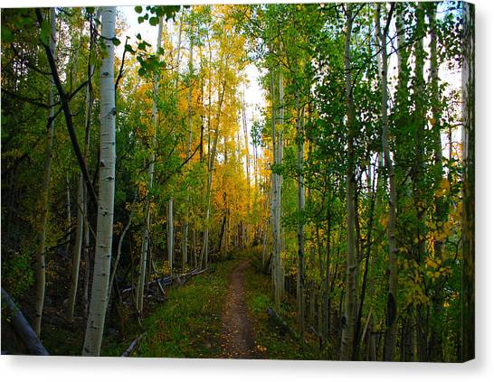 Colorado Fall Hike Canvas Print