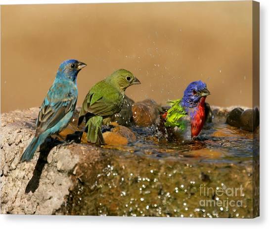 Colorful Bathtime Canvas Print