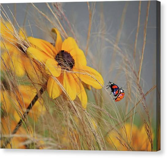 Colors Of Summer Canvas Print by Anna Cseresnjes