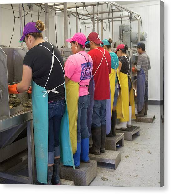 Protective Clothing Canvas Print - Commercial Oyster Processing by Jim West