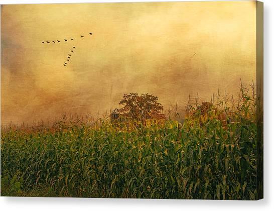 Cornfield And Fog Canvas Print