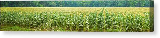 Ohio Valley Canvas Print - Cornfield, Cuyahoga Valley National by Panoramic Images
