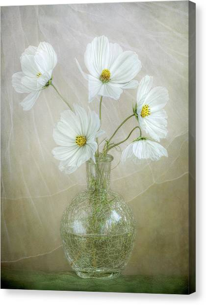Cosmos Flower Canvas Print - Cosmos Breeze by Mandy Disher