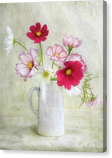 Cosmos Flower Canvas Print - Cosmos Carnival by Mandy Disher